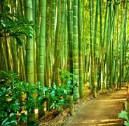 teakbamboo